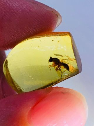 1.  24g Unknown Big Fly Burmite Myanmar Burmese Amber Insect Fossil Dinosaur Age