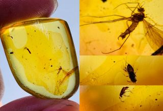 3g Scorpion Fly&wasp&beetle Burmite Myanmar Amber Insect Fossil Dinosaur Age
