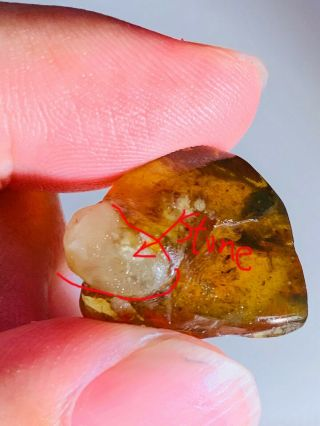 2.  28g Stone Grow With Amber Burmite Myanmar Amber Insect Fossil Dinosaur Age