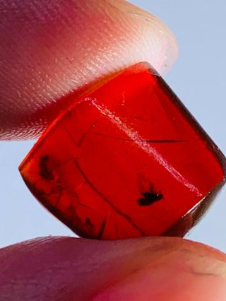 0.  74g Fly In Red Blood Amber Burmite Myanmar Amber Insect Fossil Dinosaur Age