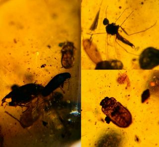 4.  8g Plant&mineral Burmite Myanmar Burmese Amber Insect Fossil Dinosaur Age