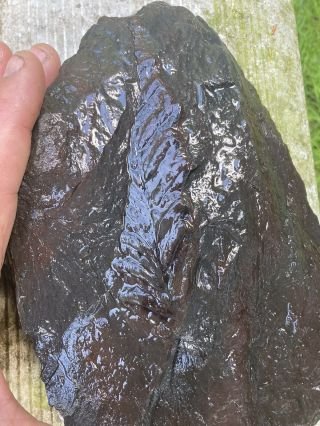 Double Sided Fern Fossil On Antracit Slate Rock