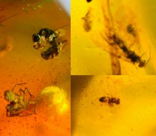 Unknown Fly&wasp&barklice&spider Burmite Myanmar Amber Insect Fossil Dinosaur Ag