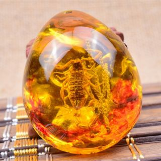 1pc Fashion Insect Stone Scorpions Inclusion Amber Baltic Pendant Necklace Ehhh
