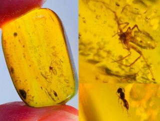 2.  76g Spider&wasp Bee Burmite Myanmar Burmese Amber Insect Fossil Dinosaur Age