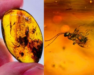 3.  1g Wasp Bee&plant Burmite Myanmar Burmese Amber Insect Fossil Dinosaur Age